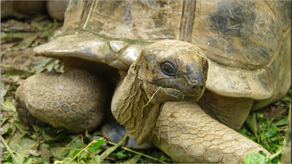 Animaux des Seychelles 20140527_02341095