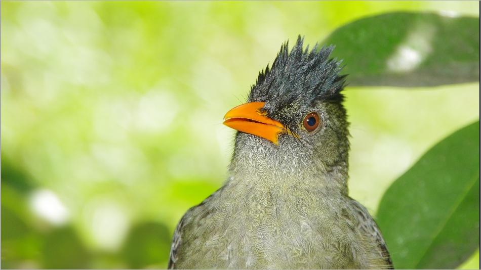 Animaux des Seychelles 20140527_02345092