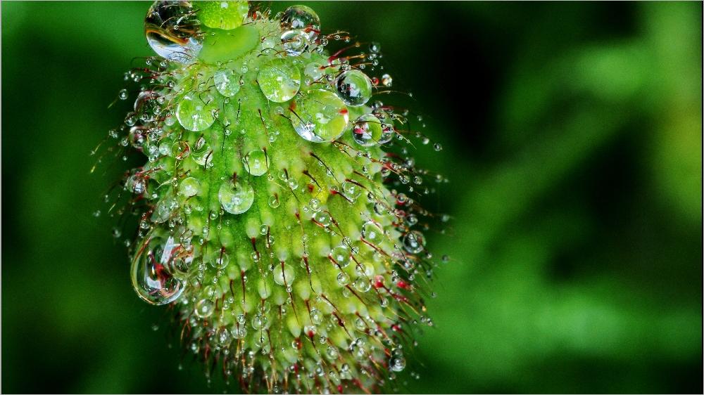 Il pleut sur le petit monde du jardin Imgp2114a