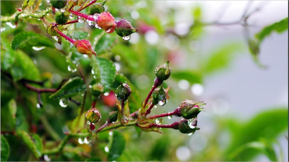 Il pleut sur le petit monde du jardin Imgp2129