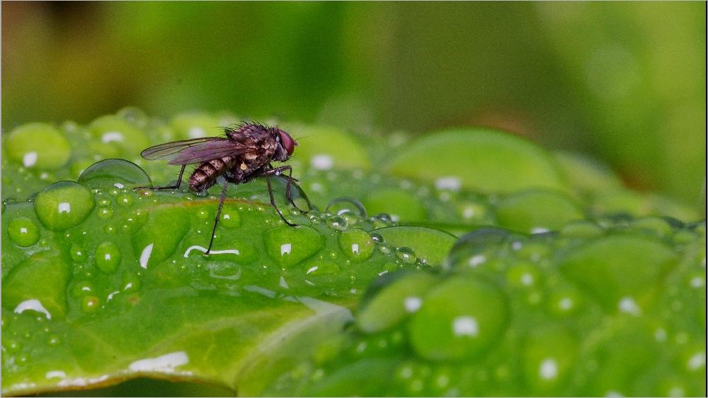 Il pleut sur le petit monde du jardin Imgp2134