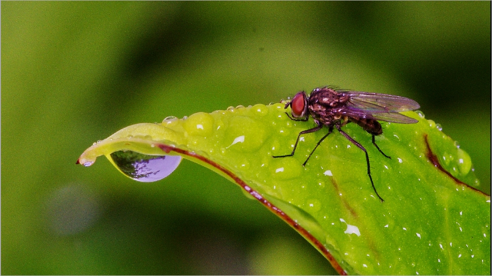 Il pleut sur le petit monde du jardin Imgp2143