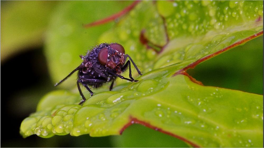 Il pleut sur le petit monde du jardin Imgp2145