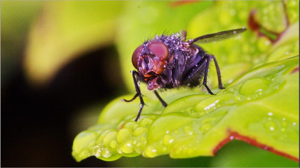 Il pleut sur le petit monde du jardin Imgp2146