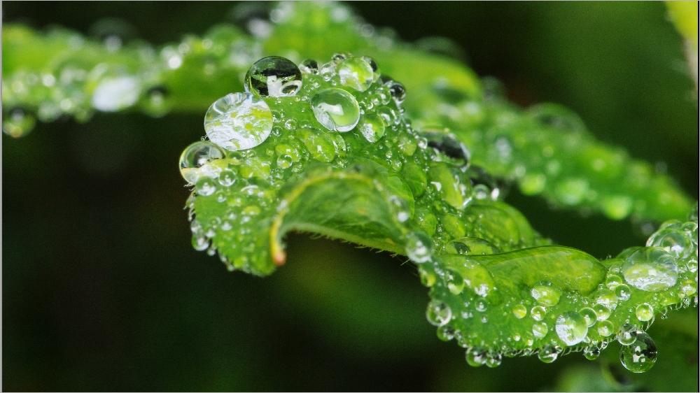 Il pleut sur le petit monde du jardin Imgp2147