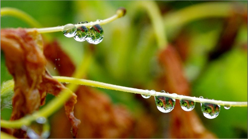 Il pleut sur le petit monde du jardin Imgp2153