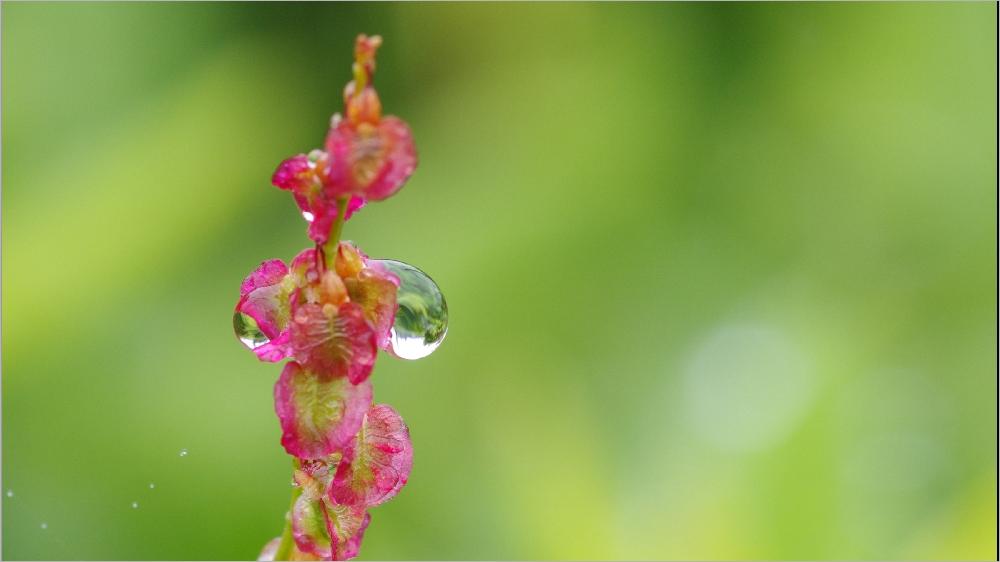 Il pleut sur le petit monde du jardin Imgp2154