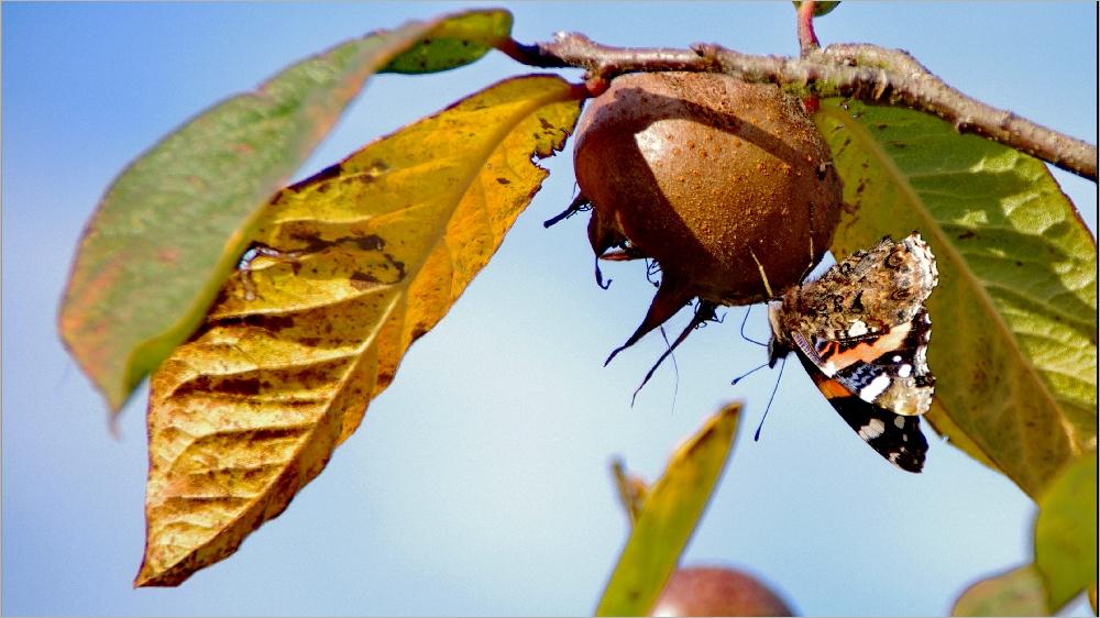 Couleurs d'automne pour les bestioles Imgp8239