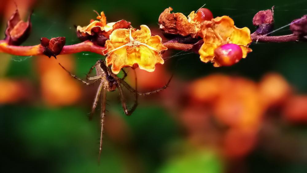 des araignées Automne