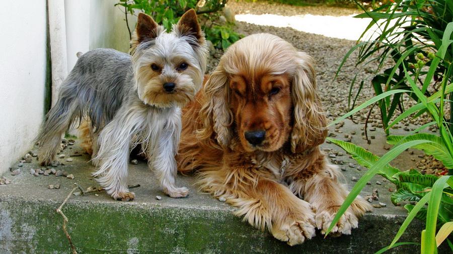 Mes chiens K5_p3